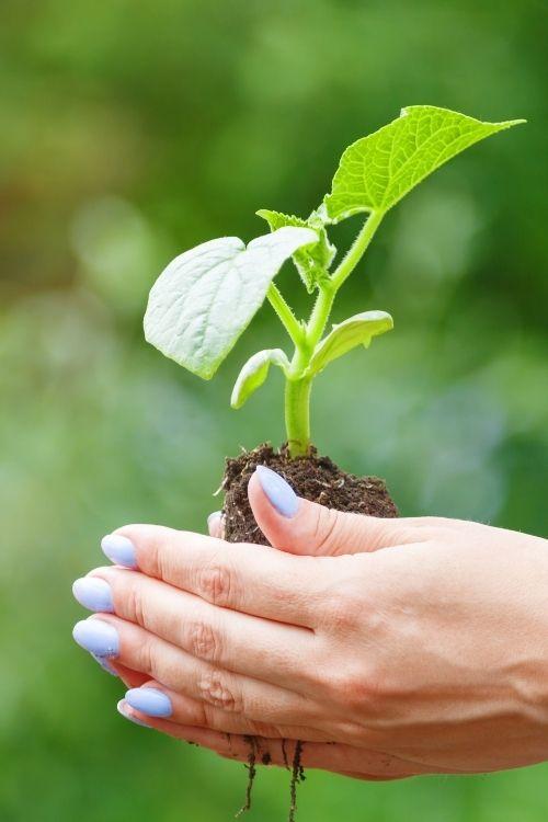 d-uñas nails & beauty|La marca original de belleza de manos & pies-Somos Ecobeauty